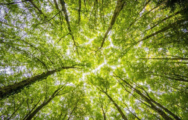 pegada ecológica, tbfiles, eco-friendly